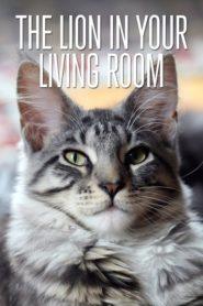 Lev (kočka) ve vašem obýváku