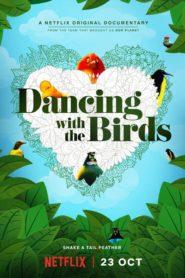 Když ptáci tančí