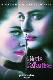 Ptáci z ráje